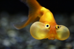 l-super-cute-fish
